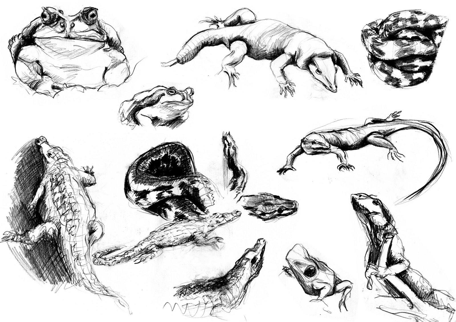Coloriages à imprimer : Reptiles, numéro : 25789