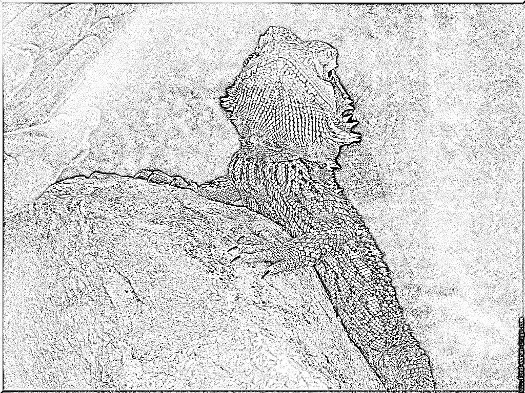 Coloriages à imprimer : Reptiles, numéro : 28201