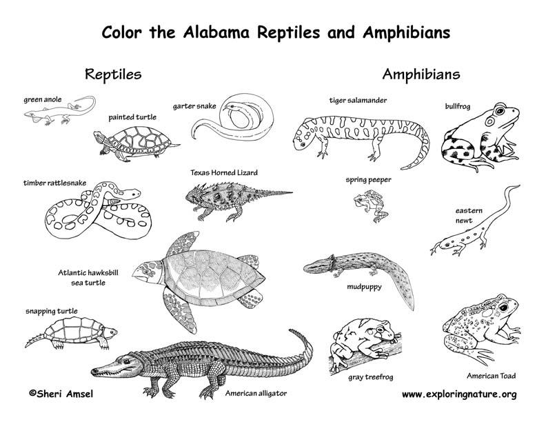 Coloriages à imprimer : Reptiles, numéro : 755722