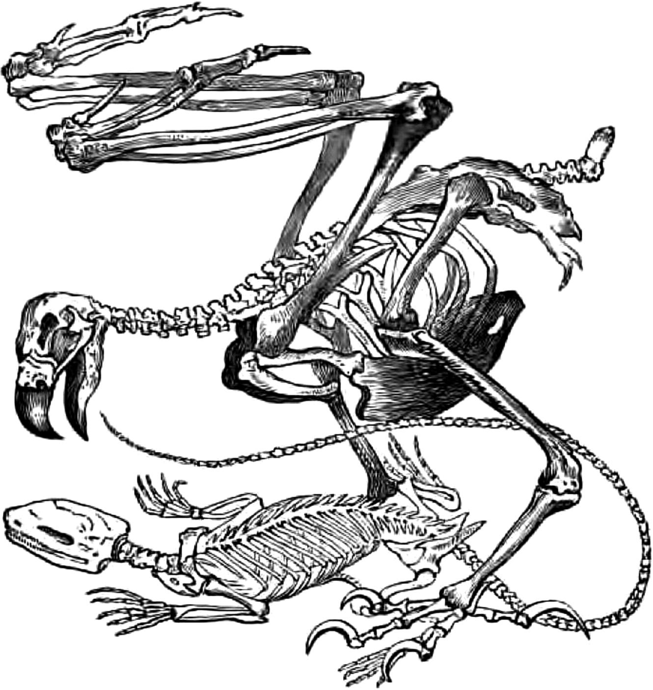 Coloriages à imprimer : Reptiles, numéro : 760183