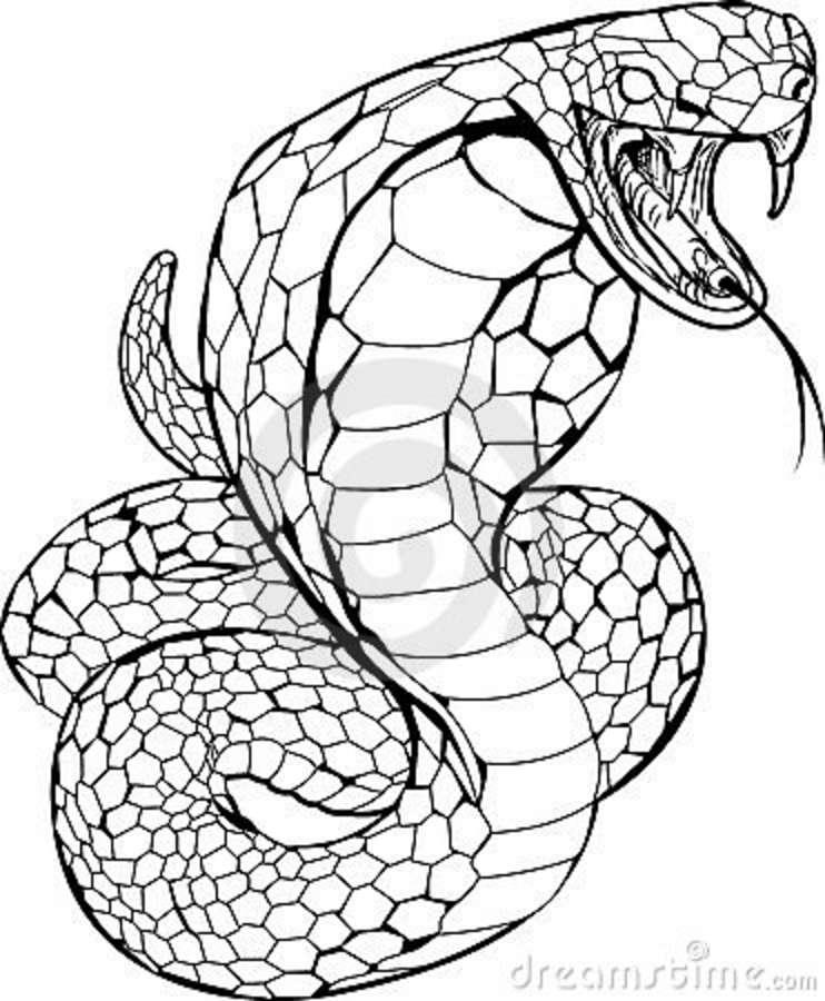 Coloriage Animaux Serpent.Coloriages A Imprimer Serpent Numero 425324