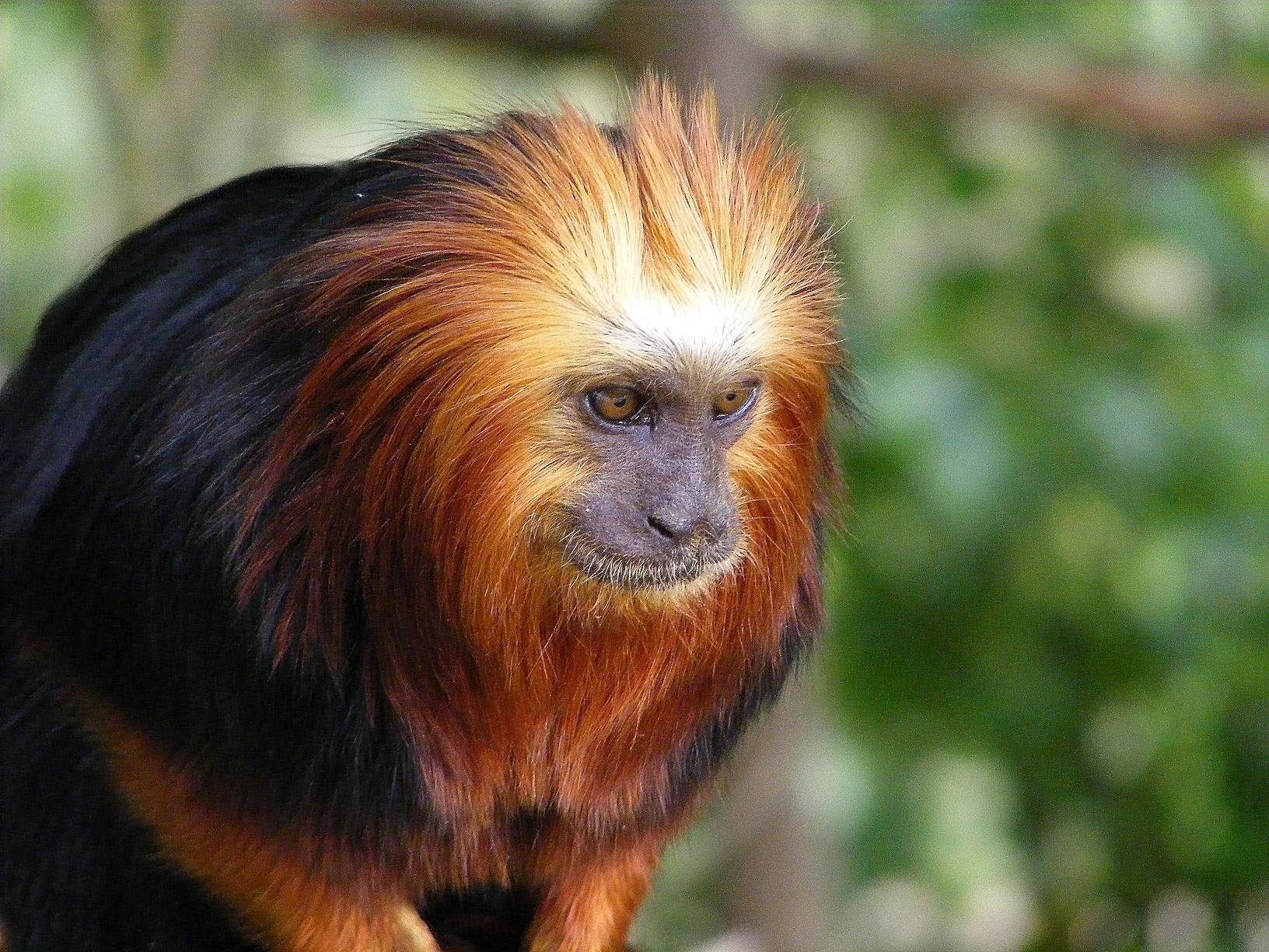 Dessins en couleurs imprimer singe num ro 685806 - Singe de dora ...