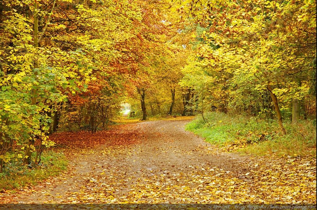 Dessins en couleurs imprimer nature num ro 22305 - Image automne gratuite imprimer ...