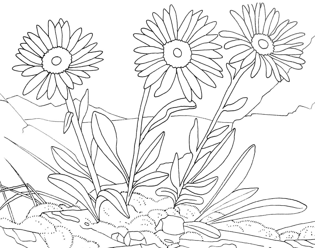 Coloriages à imprimer : Nature, numéro : 45295c79