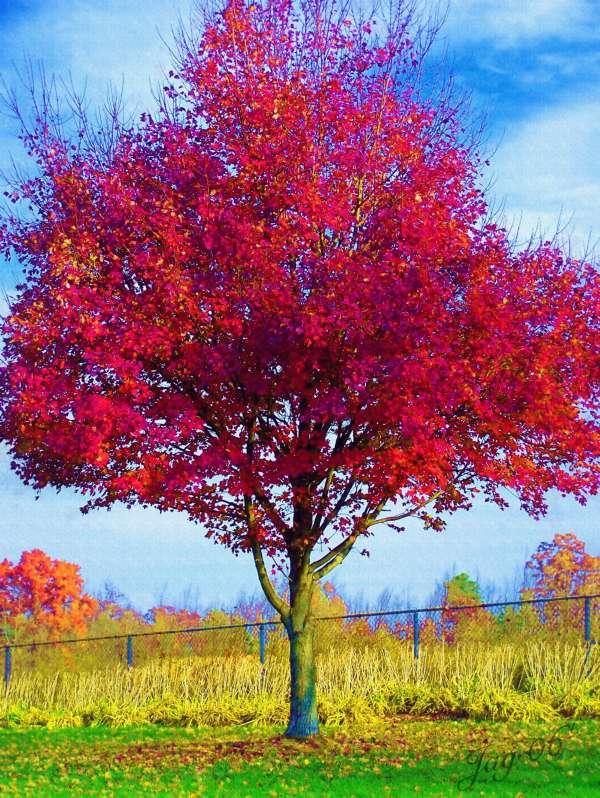 dessins en couleurs imprimer arbres num ro 26678. Black Bedroom Furniture Sets. Home Design Ideas