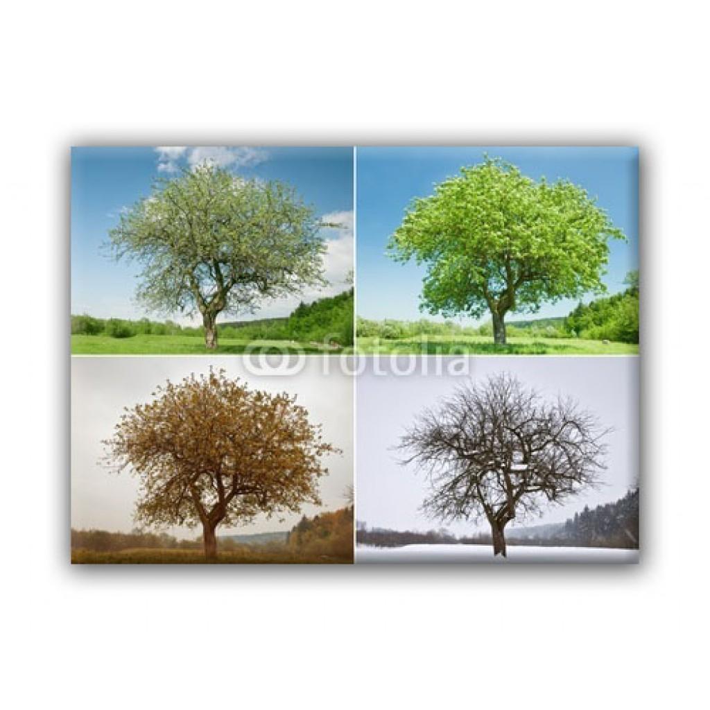dessins en couleurs imprimer arbres num ro 476465. Black Bedroom Furniture Sets. Home Design Ideas