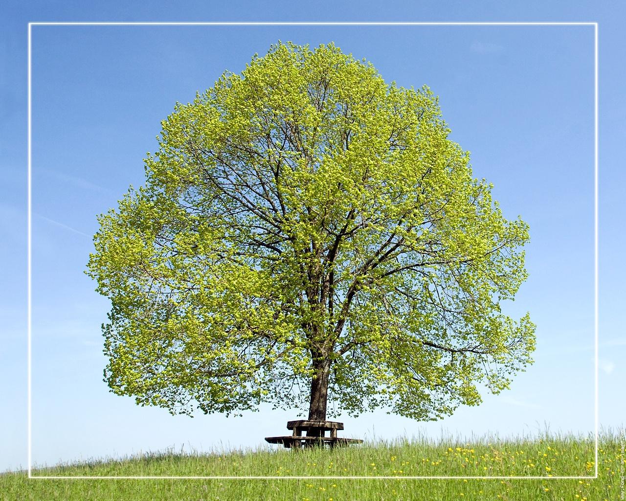 dessins en couleurs imprimer arbres num ro 683472. Black Bedroom Furniture Sets. Home Design Ideas