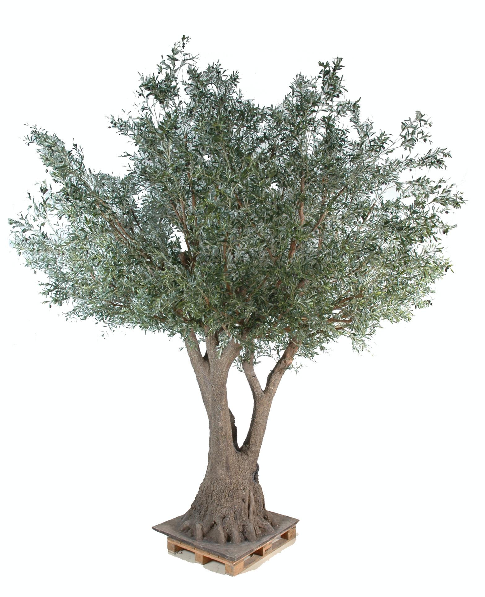 Dessin en couleurs imprimer nature arbres num ro 683498 - Comment entretenir un olivier arbre ...
