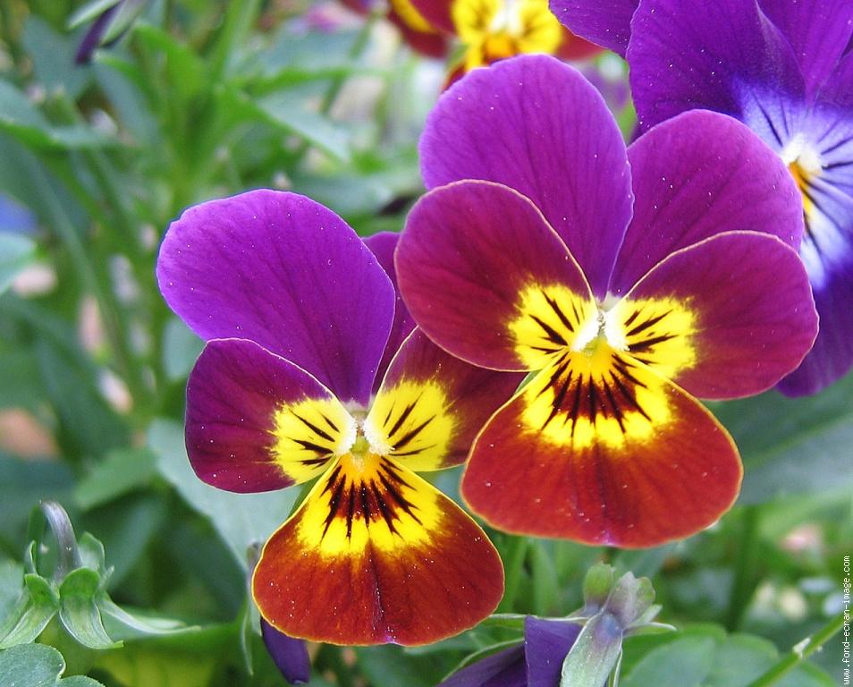 Dessins en couleurs imprimer fleurs num ro 246781 - Photo de fleur a imprimer ...