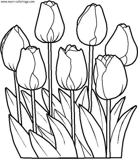 Coloriages à imprimer : Fleurs, numéro : 3120