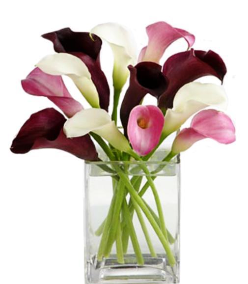 Coloriage Fleur Arum.Dessins En Couleurs A Imprimer Fleurs Numero 336945