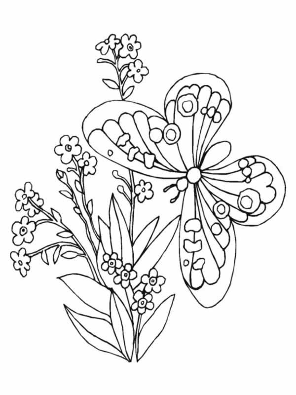 Coloriages à imprimer : Fleurs, numéro : 5223