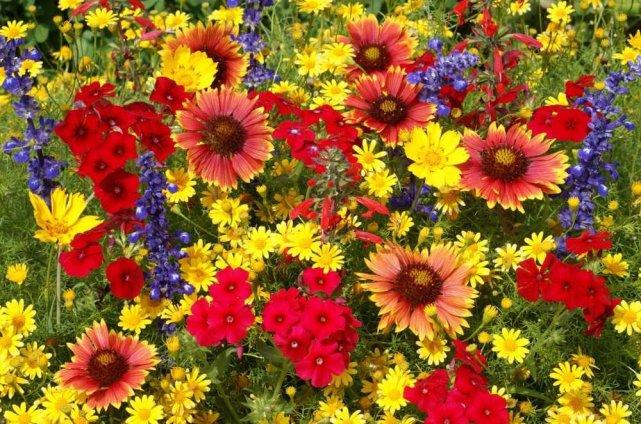 Dessins en couleurs imprimer fleurs num ro 580422 - Dessin de fleur en couleur ...