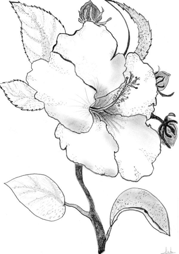 Coloriages à imprimer : Fleurs, numéro : 6955