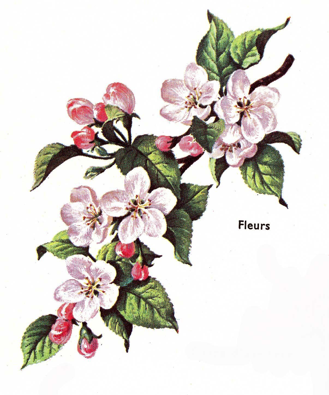Dessins en couleurs à imprimer : Fleurs, numéro : 70907