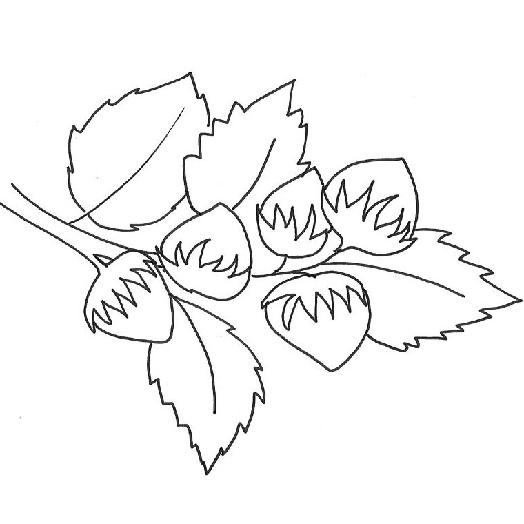 Coloriages imprimer ananas num ro 56183 - Dessin noisette ...