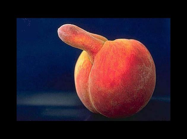 Dessin en couleurs à imprimer : Nature - Fruits - Pêche numéro 301294