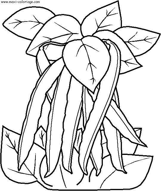 Coloriages à imprimer : Légumes, numéro : 8179