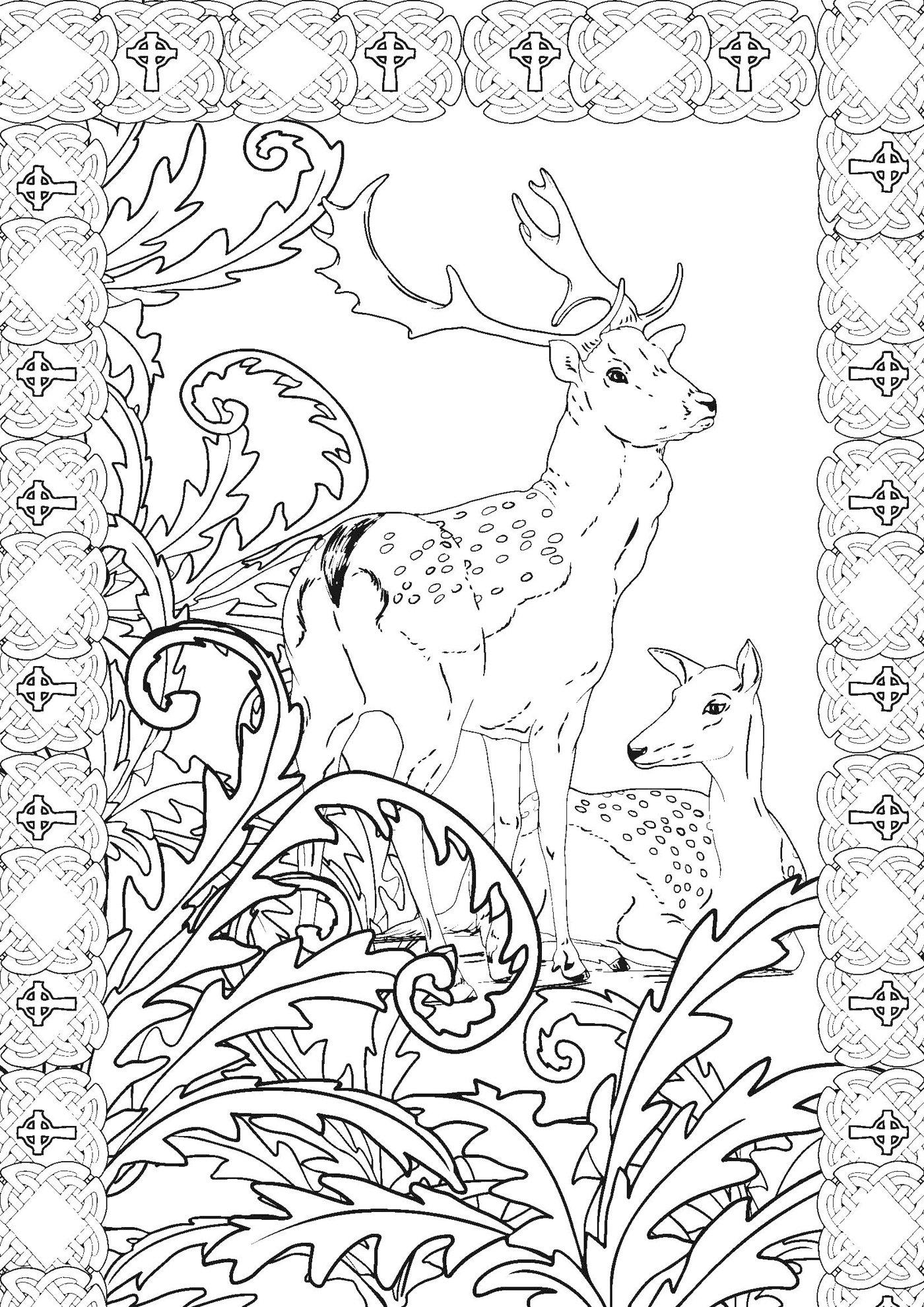 Coloriages à imprimer : Personnages féeriques, numéro : c32efe97