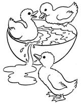 Imprimer le coloriage : Animaux, numéro 16253