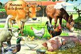 Imprimer le dessin en couleurs : Animaux, numéro 18610