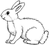 Imprimer le coloriage : Animaux, numéro 3885