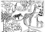 Imprimer le coloriage : Animaux, numéro 56e83f2