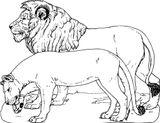 Imprimer le coloriage : Animaux carnivores, numéro 1b94eb59