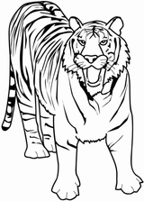 Imprimer le coloriage : Animaux carnivores, numéro 205139