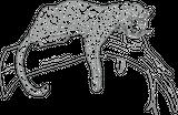 Imprimer le dessin en couleurs : Animaux carnivores, numéro 24853