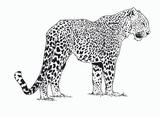 Imprimer le coloriage : Animaux carnivores, numéro 25727