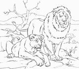 Imprimer le coloriage : Animaux carnivores, numéro 3251