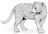 Imprimer le coloriage : Animaux carnivores, numéro 64691