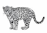 Imprimer le coloriage : Animaux carnivores, numéro 64692