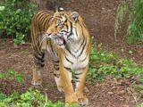 Imprimer le dessin en couleurs : Animaux carnivores, numéro 684484