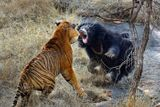 Imprimer le dessin en couleurs : Animaux carnivores, numéro 684511
