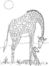 Imprimer le coloriage : Animaux carnivores, numéro 760167