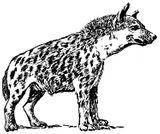 Imprimer le coloriage : Hyène, numéro 25767