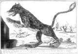 Imprimer le coloriage : Hyène, numéro 755727