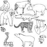 Imprimer le coloriage : Animaux carnivores, numéro cdaf0448