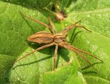 Imprimer le dessin en couleurs : Arachnides, numéro 181659