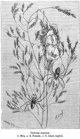 Imprimer le coloriage : Arachnides, numéro 198139