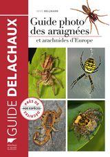 Imprimer le dessin en couleurs : Arachnides, numéro 1d1c1d8d