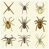 Imprimer le dessin en couleurs : Arachnides, numéro 200bef05