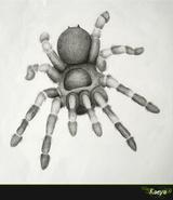 Imprimer le dessin en couleurs : Arachnides, numéro 201299