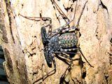 Imprimer le dessin en couleurs : Arachnides, numéro 22786