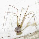 Imprimer le dessin en couleurs : Arachnides, numéro 22797