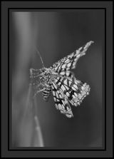 Imprimer le coloriage : Arachnides, numéro 24095