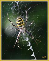 Imprimer le dessin en couleurs : Arachnides, numéro 257553