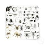 Imprimer le dessin en couleurs : Arachnides, numéro 267108